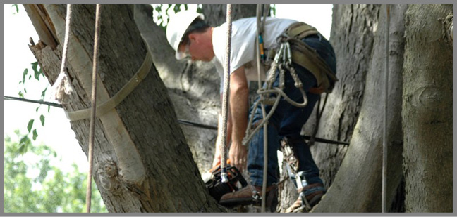 Arbor Care Tree Maintenance and Trimming Services