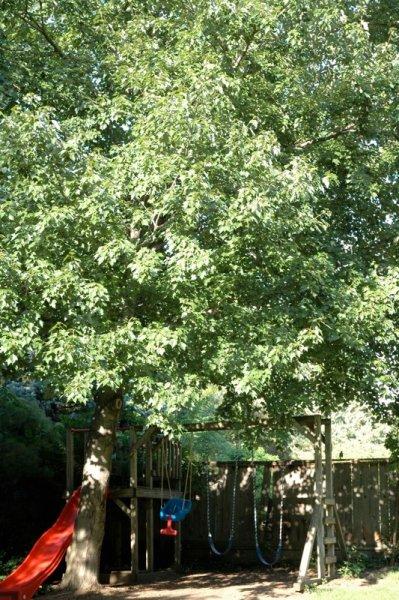 Tree Trimming Amp Pruning In Kansas And Missouri Arbor